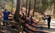 Zum Laubfegen in den Wald